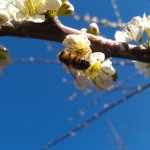 Thumbnail image for Photo of Spring in Bloom