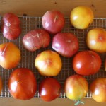 Thumbnail image for 5 Common Mistakes that Ruin Your Fresh Tomatoes—and How to Avoid Them