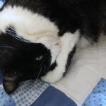 Thumbnail image for Sylvester: World's Happiest Kitty